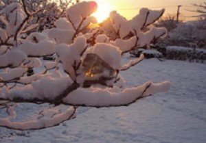 snow-andara